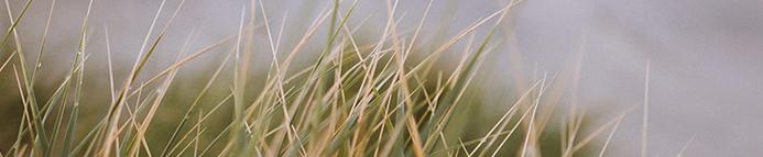 Women's Grass 2